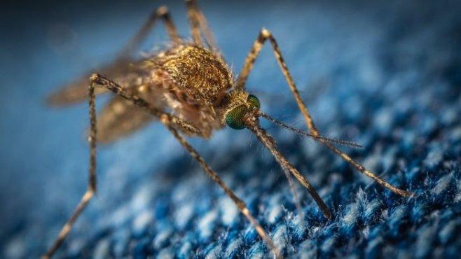Как избавиться от комаров на своем участке или на заднем дворе