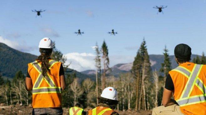 Как в Канаде дроны садят лес в 10 раз быстрее, чем люди с лопатами