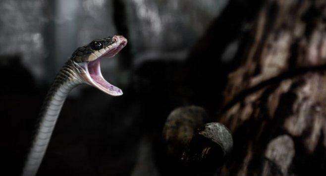 Что делать если укусила ядовитая змея: рекомендации и порядок действий