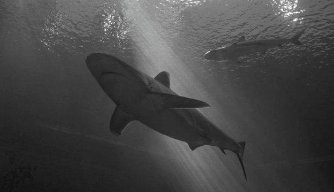 Будь как акула – продолжай двигаться