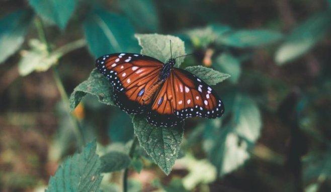 Поучительная история про бабочку и важность борьбы в нашей жизни
